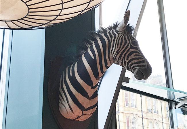 zebra head Greenwood bar